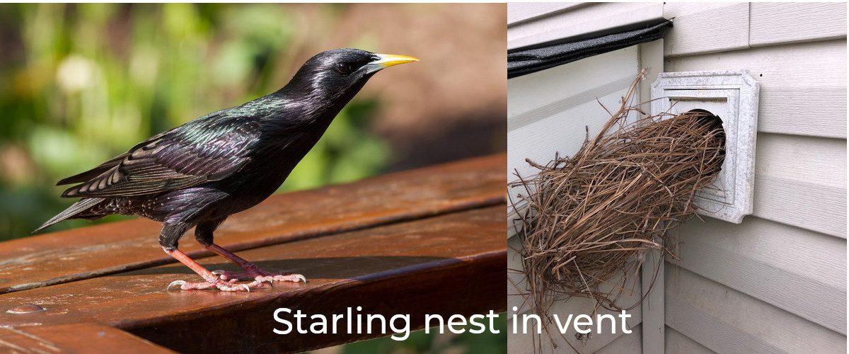 Starling Slider